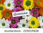 gracias  which means thank you... | Shutterstock . vector #255019828