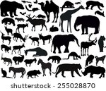 Stock vector illustration with animals collection isolated on white background 255028870