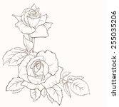 vintage elegant vector card... | Shutterstock .eps vector #255035206