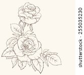 Vector Rose Flower Isolated On...