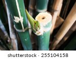 bamboo green forest background | Shutterstock . vector #255104158