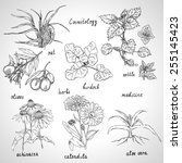 collection of hand drawn herbs... | Shutterstock .eps vector #255145423