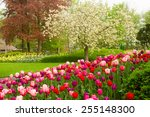 Spring Garden With Blooming...