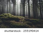 Wilderness Landscape Forest...