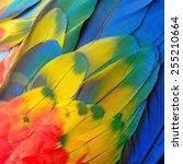 beautiful bird feathers ... | Shutterstock . vector #255210664
