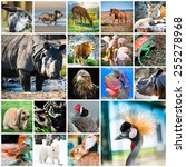 collage of beautiful colorful... | Shutterstock . vector #255278968