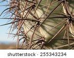 Sharp Cactus Needles