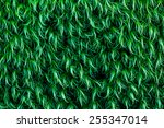 Small photo of Dark green background of hairy moss foliage