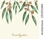 watercolor eucalyptus leaves... | Shutterstock .eps vector #255391084