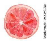 slice of grapefruit drawing by...   Shutterstock .eps vector #255393250