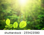 forest trees leaf. nature green ... | Shutterstock . vector #255423580