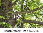 Squirrel Gray Red Color Gnaws...