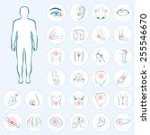 vector human anatomy  body pain ... | Shutterstock .eps vector #255546670