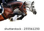 Stock photo two horses in jumping show on white background isolated 255561250