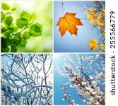 four seasons. a pictures that... | Shutterstock . vector #255566779