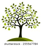 vector pear tree in two seasons ... | Shutterstock .eps vector #255567784