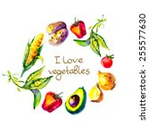 watercolor vegetables        i... | Shutterstock .eps vector #255577630