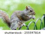 squirrel | Shutterstock . vector #255597814