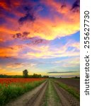 Poppies Field At Sunset In...