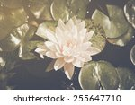 Lotus Flower On Lily Pad In...