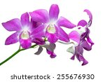purple orchid. isolated white... | Shutterstock . vector #255676930