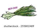 vector hand drawn vegetables... | Shutterstock .eps vector #255802489