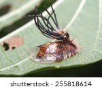 bugs and insects | Shutterstock . vector #255818614