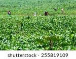 ruhengeri  rwanda november 4 ... | Shutterstock . vector #255819109