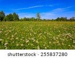 Dandelions Flower Meadow At...