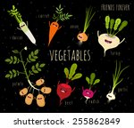 potato  onion  garlic  daikon ... | Shutterstock .eps vector #255862849