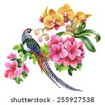 tropical birds with flowers...   Shutterstock .eps vector #255927538