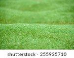 artificial grass background   Shutterstock . vector #255935710