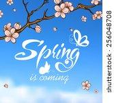 typographic design. lettering... | Shutterstock . vector #256048708