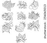 vector illustration berries   Shutterstock .eps vector #256065013