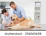 Stock photo vet using nail clipper on a dog with its owner in medical office 256065658