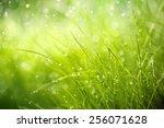 morning dew on spring grass... | Shutterstock . vector #256071628