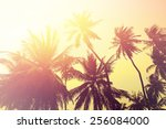 tropical beach background with... | Shutterstock . vector #256084000