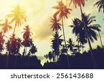 tropical jungle background with ... | Shutterstock . vector #256143688