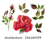 set of red roses isolated on... | Shutterstock . vector #256169299