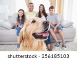 close up of dog sitting with... | Shutterstock . vector #256185103