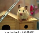 Hamster Poses In Front Of The...