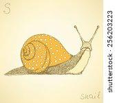 Sketch Fancy Snail In Vintage...