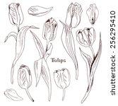 tulips set  hand drawn design... | Shutterstock .eps vector #256295410