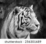 black and white closeup... | Shutterstock . vector #256301689