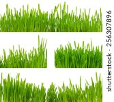 green grass isolated on white... | Shutterstock . vector #256307896