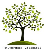 vector pear tree isolated on... | Shutterstock .eps vector #256386583