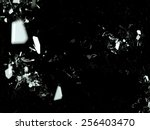 pieces of splitted or cracked... | Shutterstock . vector #256403470