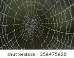 Cobweb With The Dew