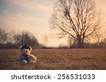 Old Toy Bear Sit In Meadow At...