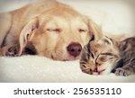 Stock photo puppy and kitten 256535110